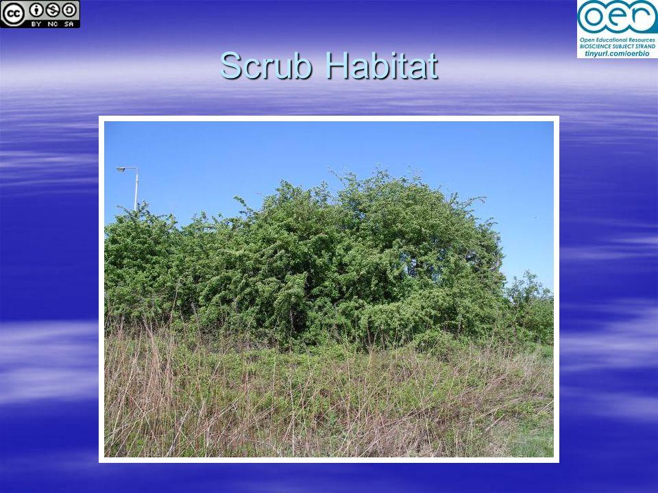 Scrub Habitat