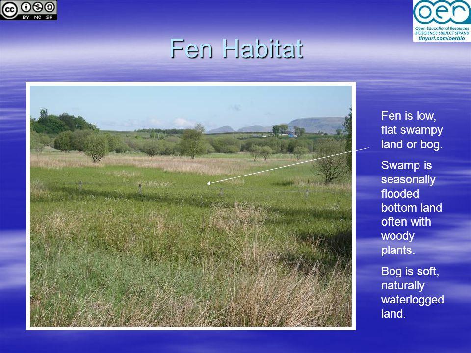 Fen Habitat Fen is low, flat swampy land or bog.