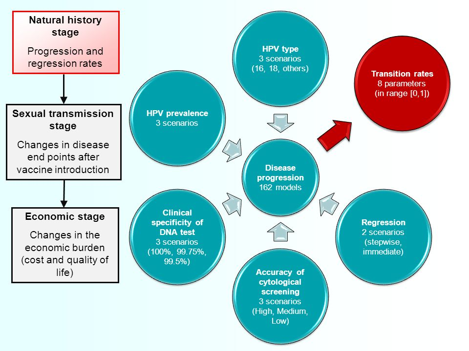 Disease progression 162 models HPV type 3 scenarios (16, 18, others) Transition rates 8 parameters (in range [0,1]) Regression 2 scenarios (stepwise, immediate) Accuracy of cytological screening 3 scenarios (High, Medium, Low) Clinical specificity of DNA test 3 scenarios (100%, 99.75%, 99.5%) HPV prevalence 3 scenarios Sexual transmission stage Changes in disease end points after vaccine introduction Natural history stage Progression and regression rates Economic stage Changes in the economic burden (cost and quality of life)