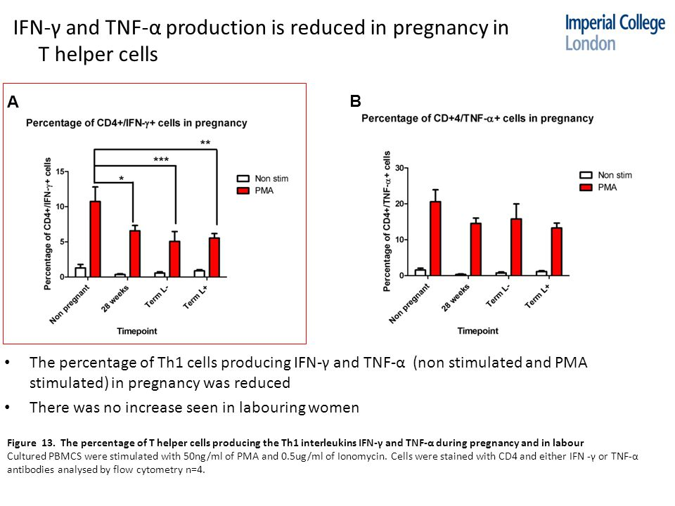 IFN-γ and TNF-α production is reduced in pregnancy in T helper cells Figure 13.