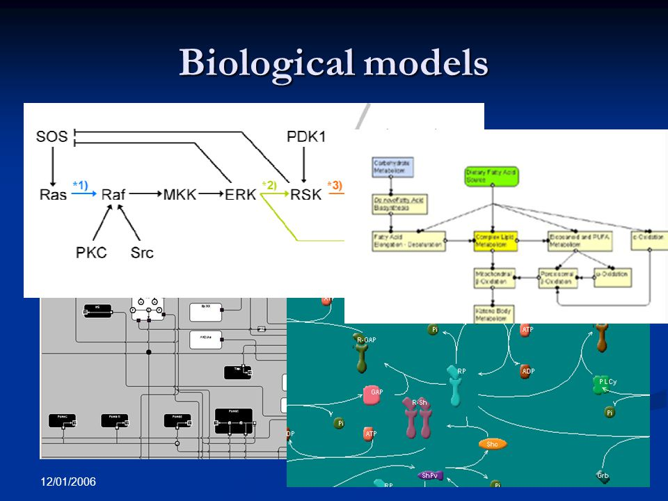 12/01/2006 A. Sorokin Biological models