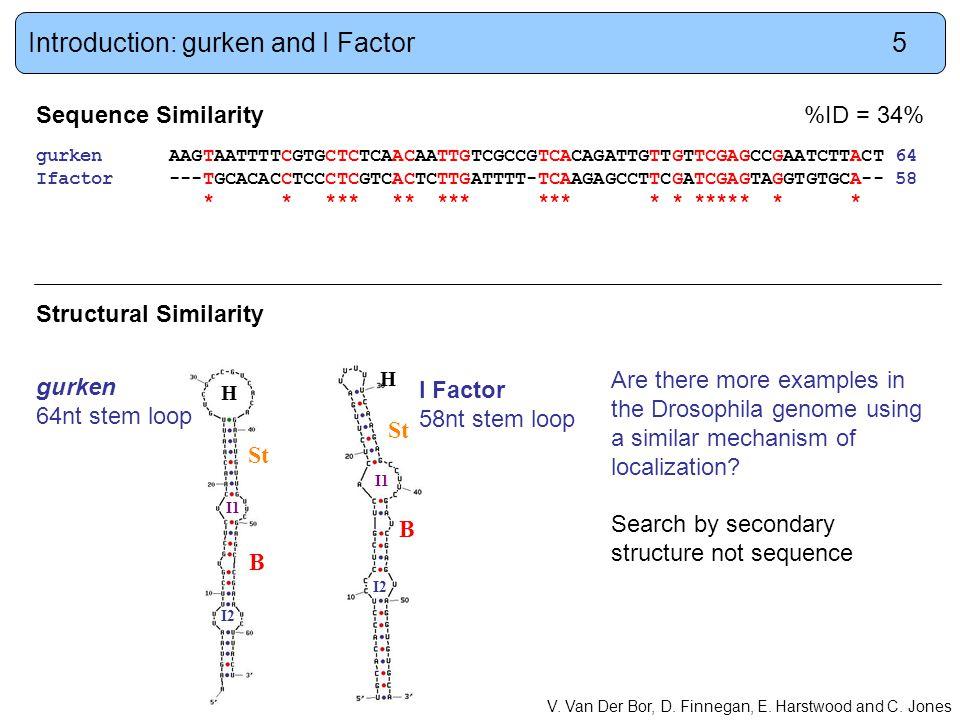 Sequence Similarity%ID = 34% gurken AAGTAATTTTCGTGCTCTCAACAATTGTCGCCGTCACAGATTGTTGTTCGAGCCGAATCTTACT 64 Ifactor ---TGCACACCTCCCTCGTCACTCTTGATTTT-TCAAGAGCCTTCGATCGAGTAGGTGTGCA-- 58 * * *** ** *** *** * * ***** * * Structural Similarity V.