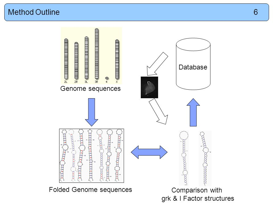 Genome sequences Database Folded Genome sequences Comparison with grk & I Factor structures Method Outline6