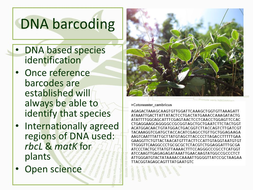 DNA barcoding DNA based species identification Once reference barcodes are established will always be able to identify that species Internationally ag