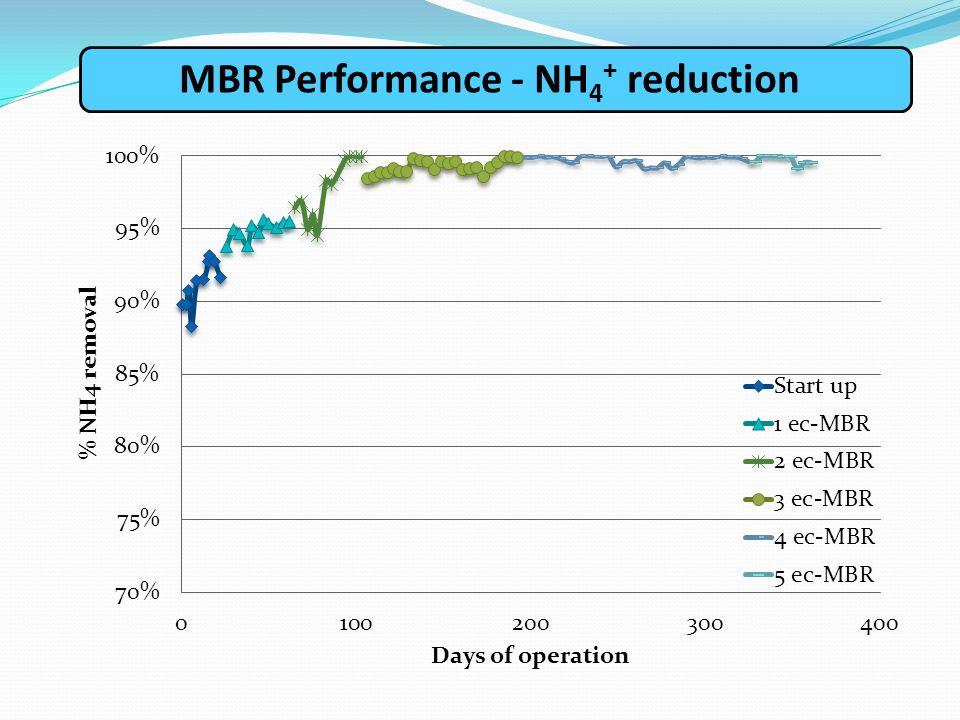 ΜΒR Performance - NH 4 + reduction