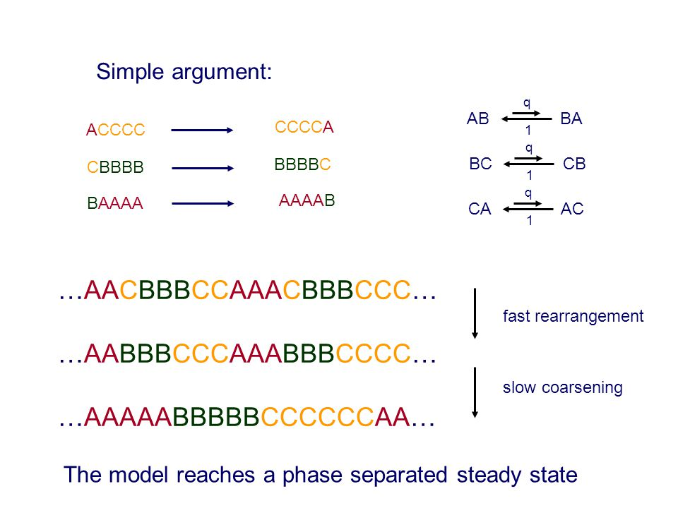 Simple argument: AB BA 1 q BC CB 1 q CA AC 1 q ACCCC CCCCA CBBBB BBBBC BAAAA AAAAB …AACBBBCCAAACBBBCCC… …AABBBCCCAAABBBCCCC… …AAAAABBBBBCCCCCCAA… fast rearrangement slow coarsening The model reaches a phase separated steady state