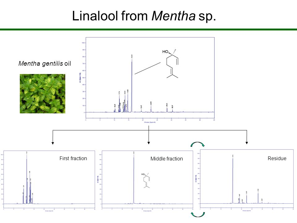 Mentha gentilis oil First fractionResidue Middle fraction Linalool from Mentha sp.