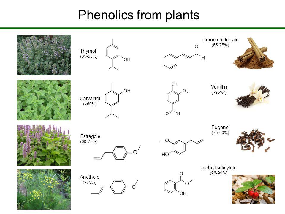Phenolics from plants O Thymol (35-55%) Carvacrol (>60%) Estragole (60-75%) Anethole (>75%) Vanillin (>95%*) Cinnamaldehyde (55-75%) Eugenol (75-90%) methyl salicylate (96-99%)