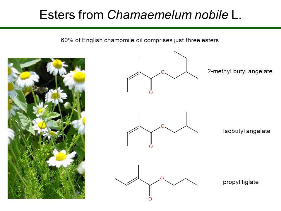 Esters from Chamaemelum nobile L.