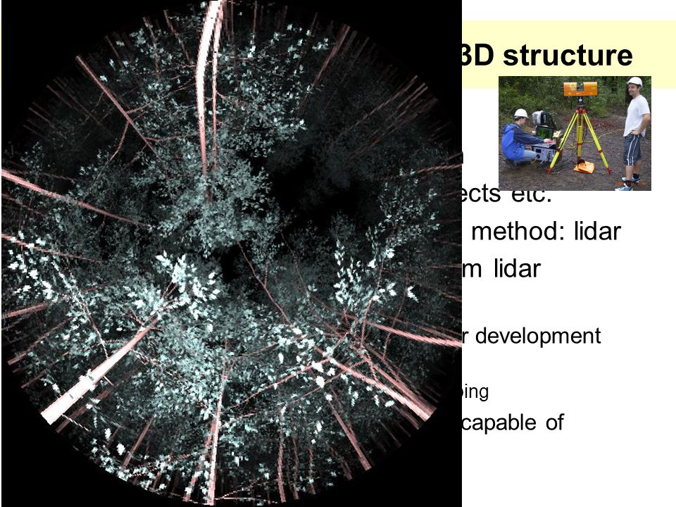Collection and generation of 3D structure  Library approach proved useful – Each tree not 'grown' as such – But can represent density effects etc.