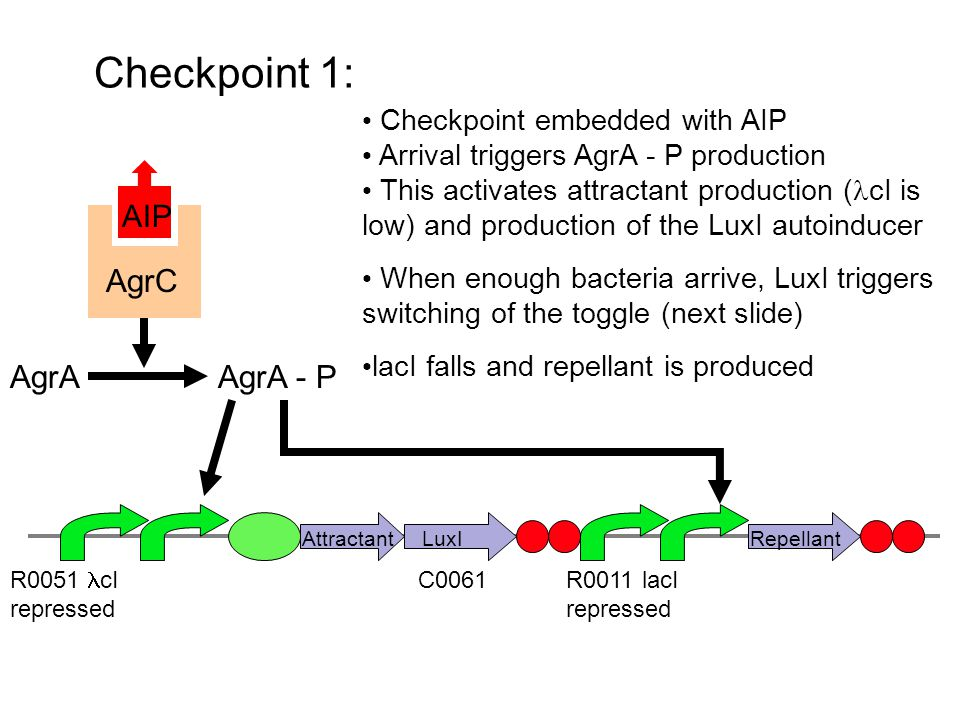 Switching: R0062: Activated by LuxR and HSL cI AgrA ComA R0051: cI Repressed R0011: LacI Repressed Activation of cI expression should cause switching of toggle.