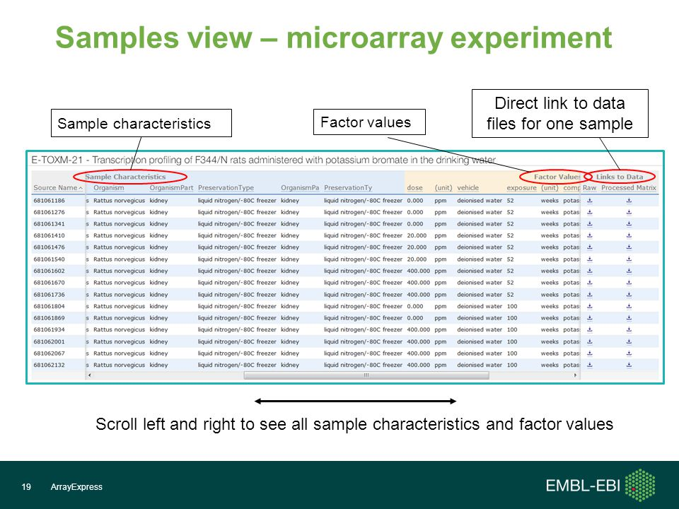 ArrayExpress19 Samples view – microarray experiment Scroll left and right to see all sample characteristics and factor values Sample characteristics Factor values Direct link to data files for one sample