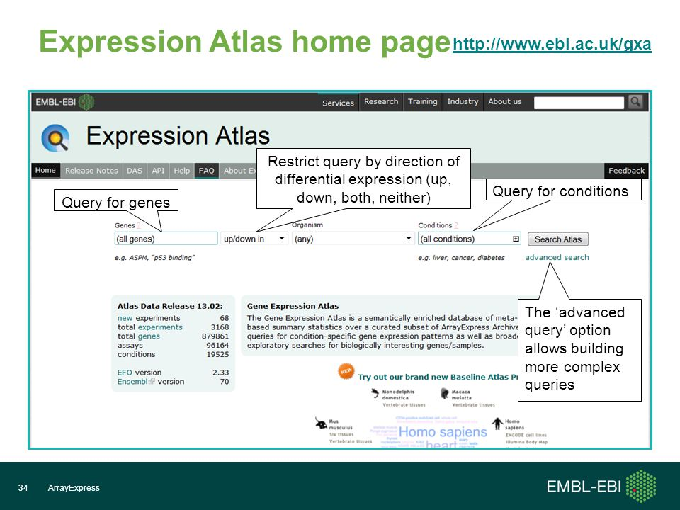 Expression Atlas home page ArrayExpress34   Query for genes Query for conditions The 'advanced query' option allows building more complex queries Restrict query by direction of differential expression (up, down, both, neither)