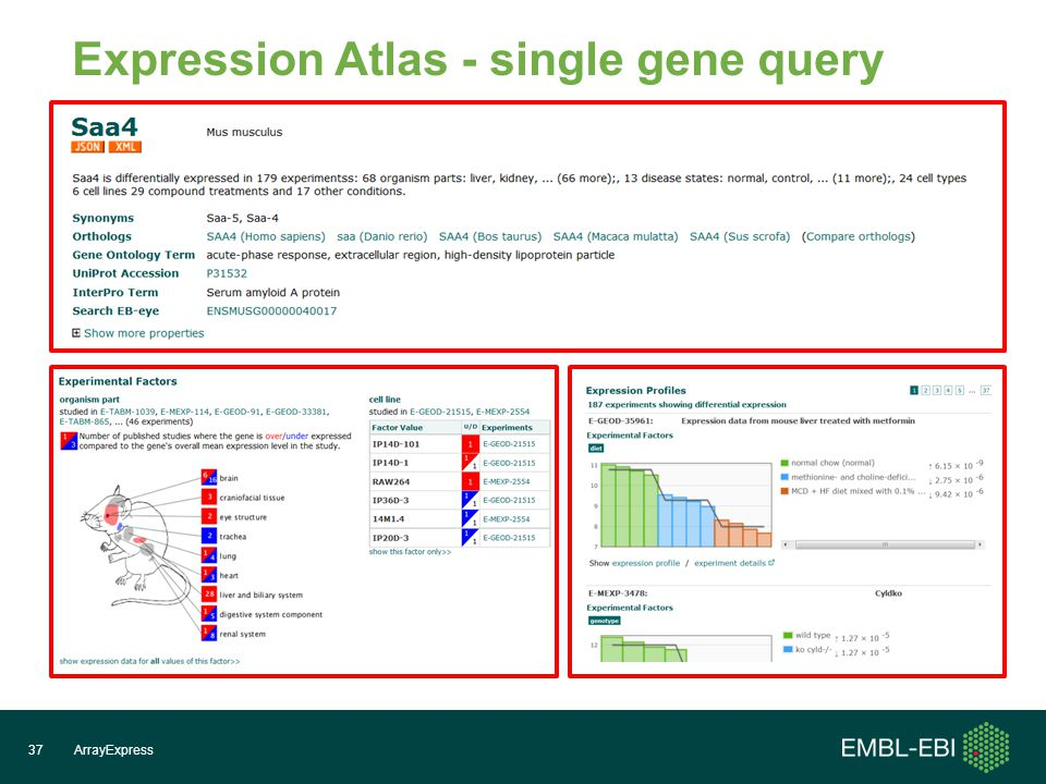 ArrayExpress37 Expression Atlas - single gene query