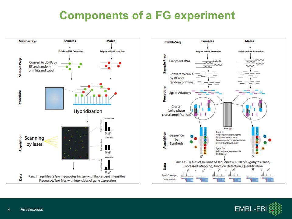 Components of a FG experiment ArrayExpress4