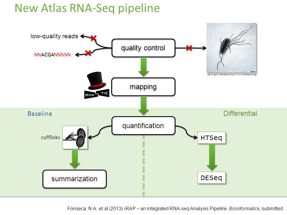New Atlas RNA-Seq pipeline quality control painting by shardcore (  low-quality reads NNACGANNNNN mapping Baseline Differential quantification summarization HTSeq cufflinks DESeq Fonseca, N.A.