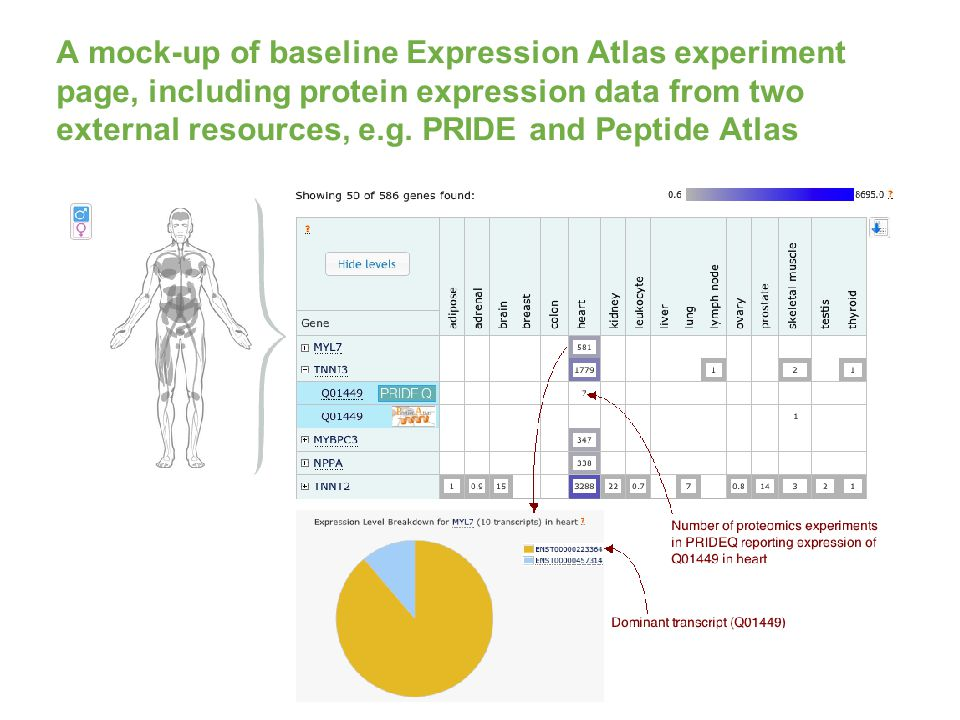 A mock-up of baseline Expression Atlas experiment page, including protein expression data from two external resources, e.g.