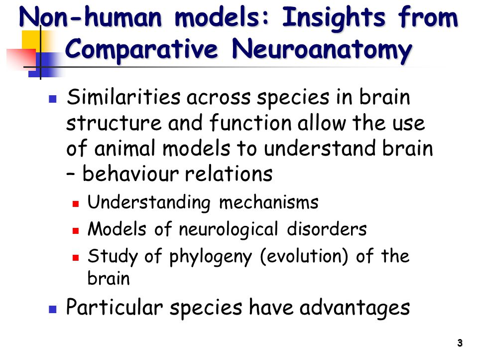 3 Non-human models: Insights from Comparative Neuroanatomy Similarities across species in brain structure and function allow the use of animal models to understand brain – behaviour relations Understanding mechanisms Models of neurological disorders Study of phylogeny (evolution) of the brain Particular species have advantages