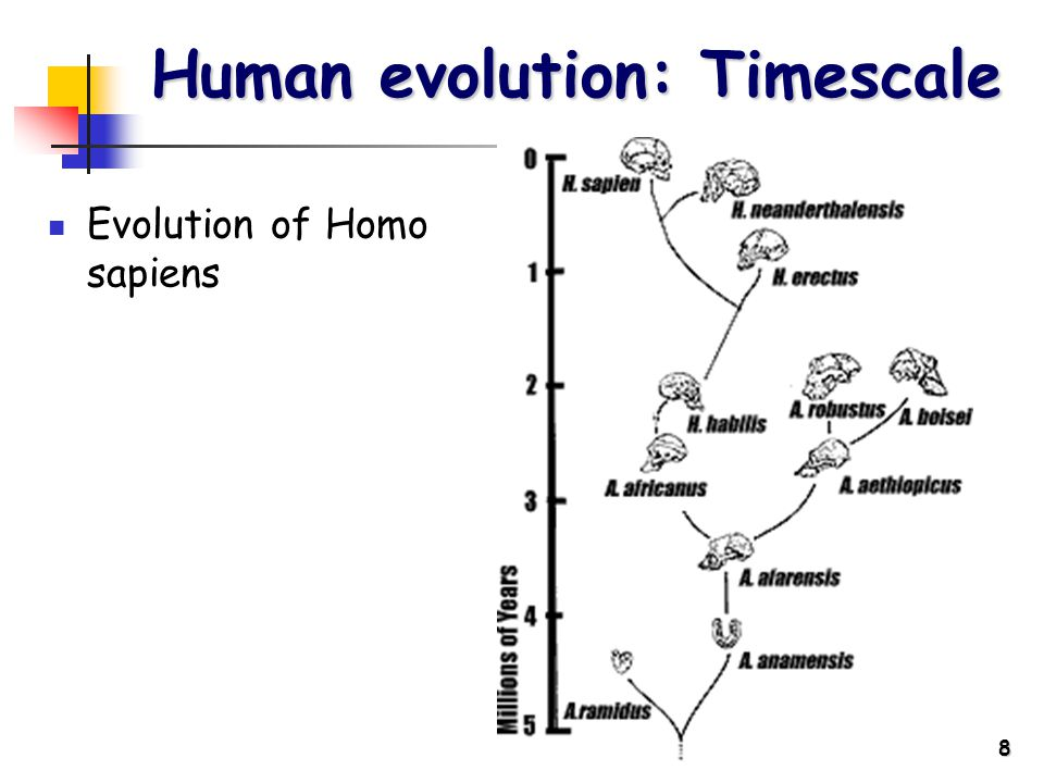 8 Human evolution: Timescale Evolution of Homo sapiens