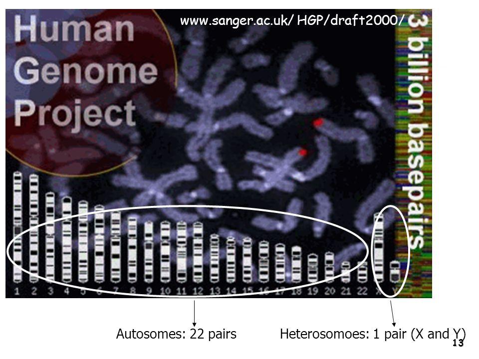 13 www.sanger.ac.uk/ HGP/draft2000/ Autosomes: 22 pairsHeterosomoes: 1 pair (X and Y)