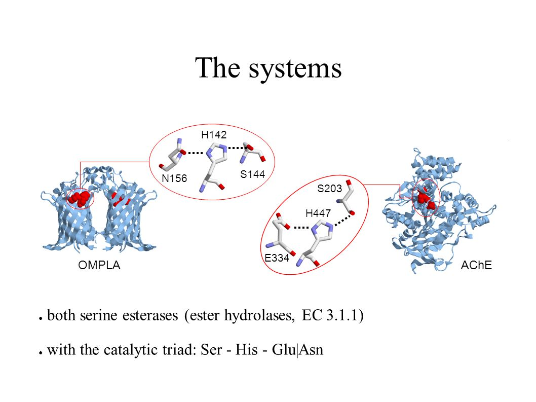 The systems ● both serine esterases (ester hydrolases, EC 3.1.1) ● with the catalytic triad: Ser - His - Glu|Asn OMPLAAChE N156 H142 S144 E334 H447 S2