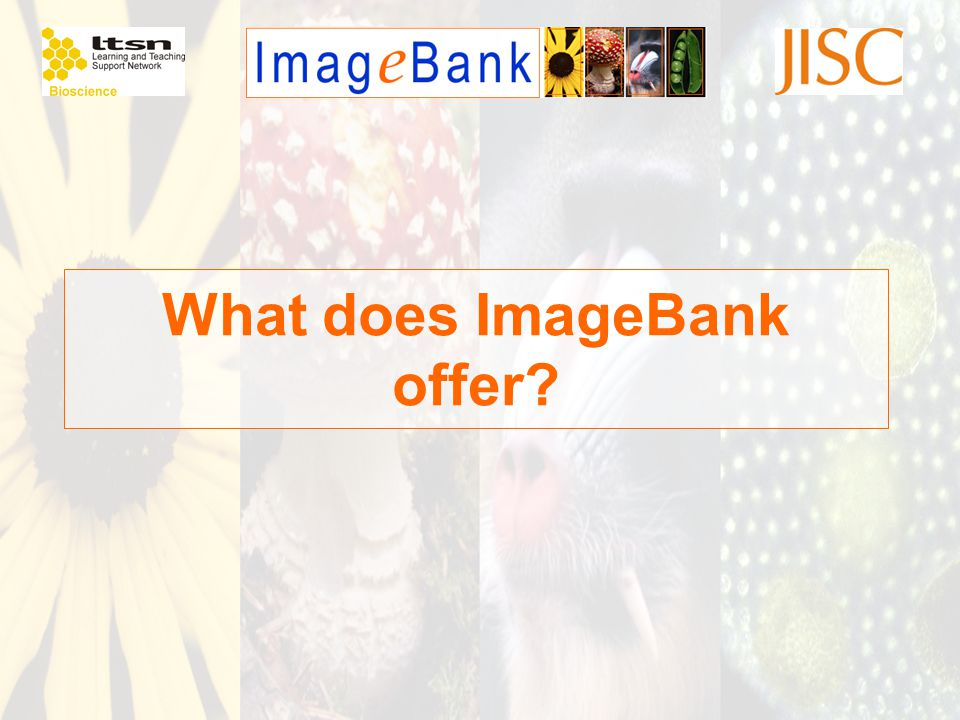 What does ImageBank offer