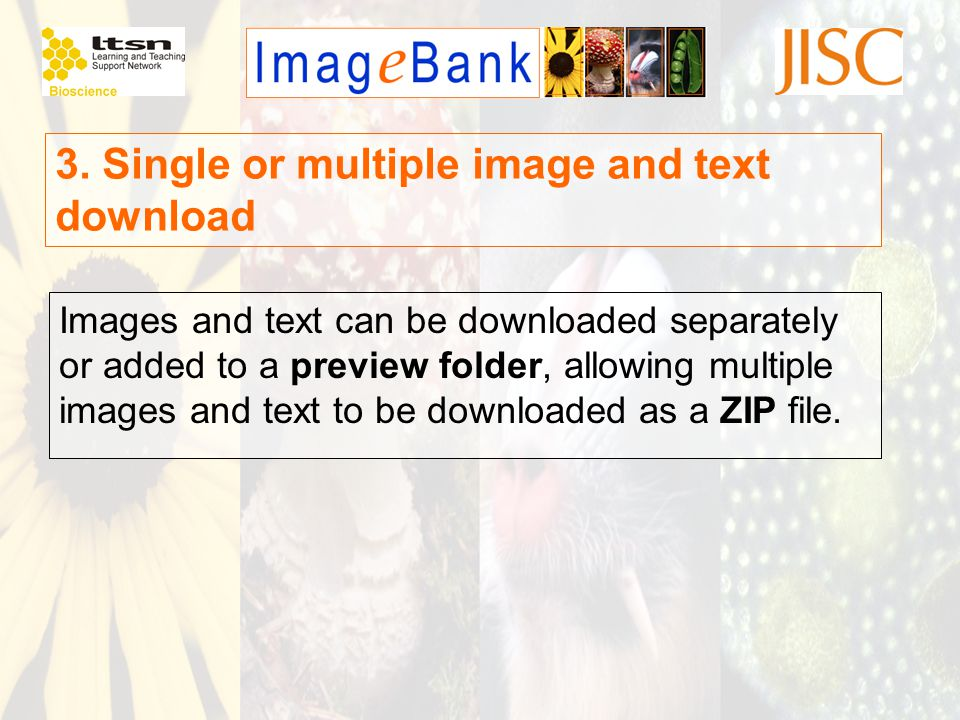 Images and text can be downloaded separately or added to a preview folder, allowing multiple images and text to be downloaded as a ZIP file. 3. Single