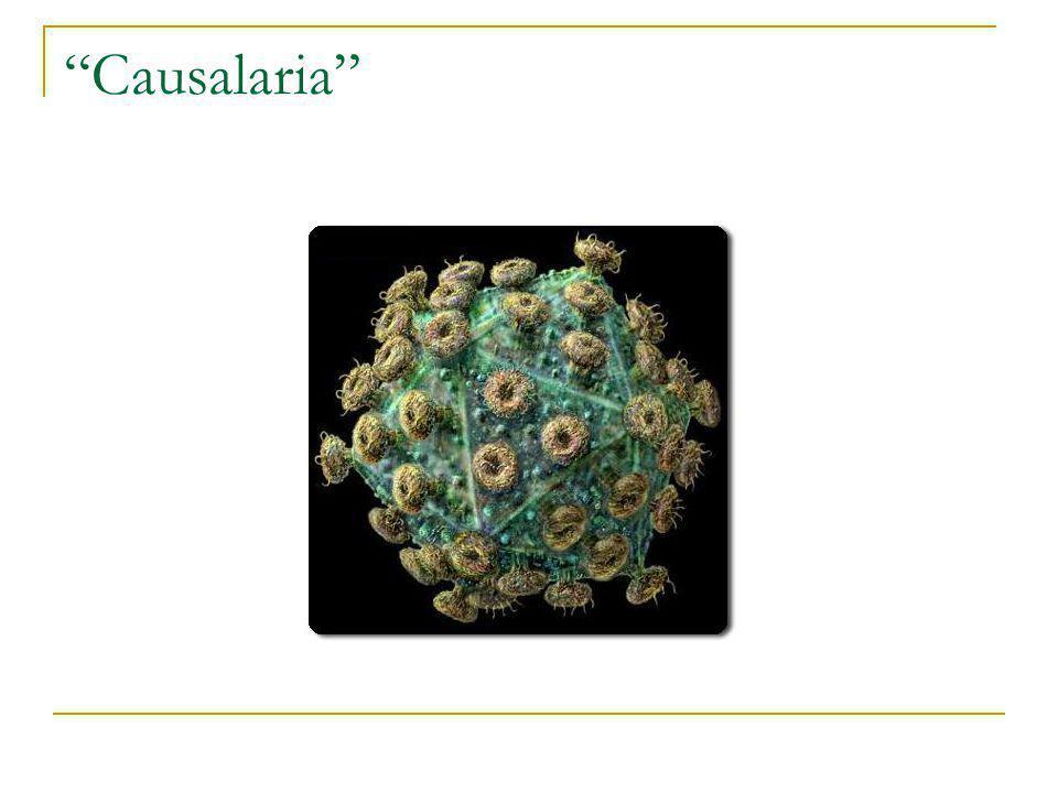 Causalaria