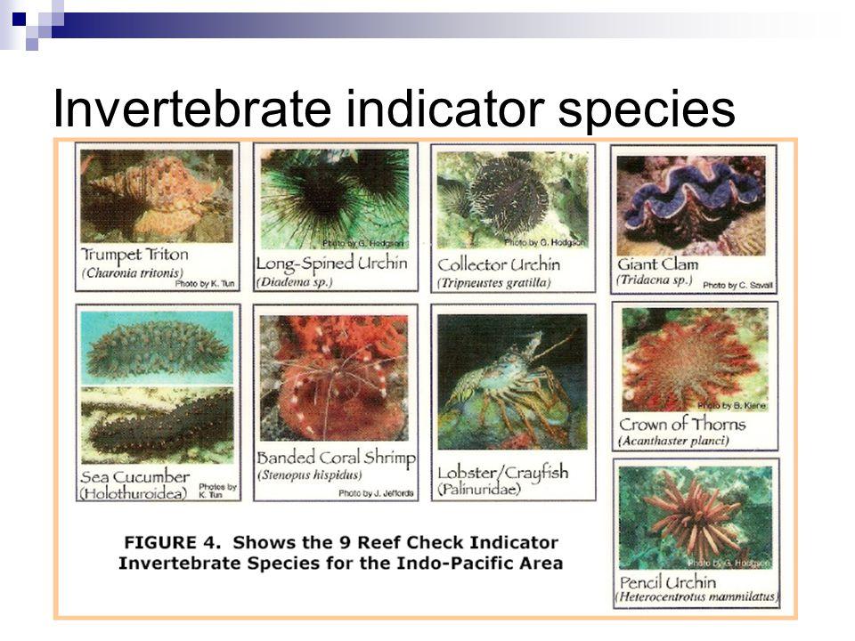 Invertebrate indicator species