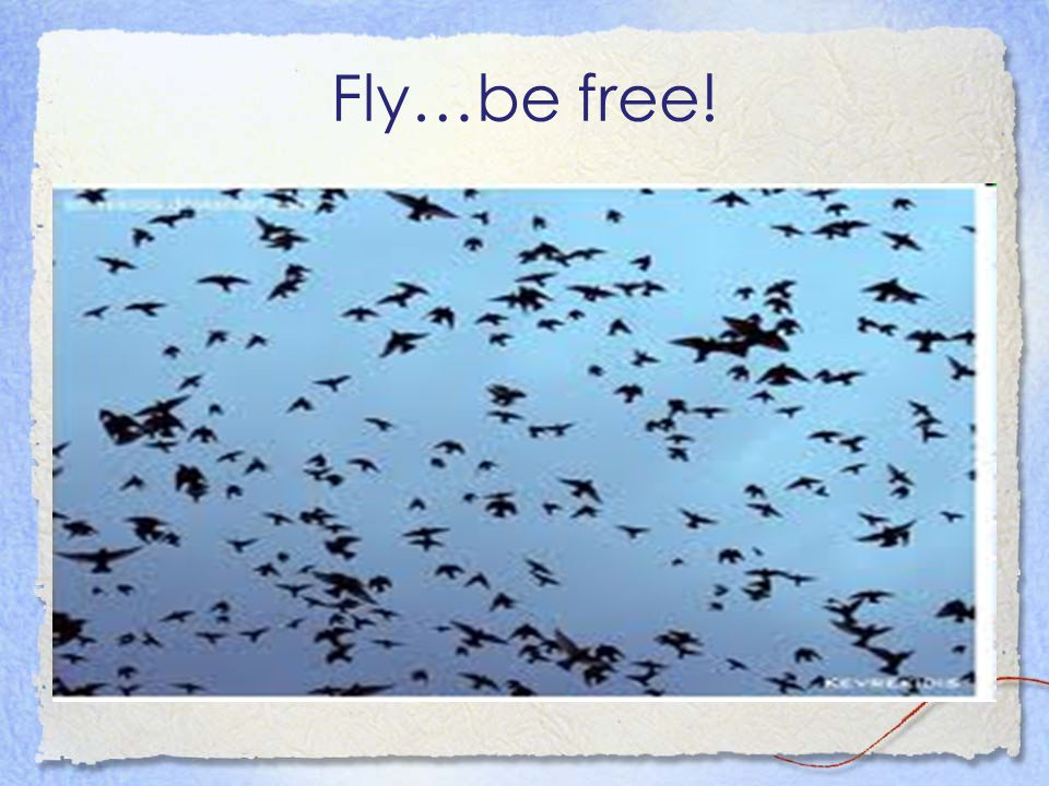 Fly…be free!