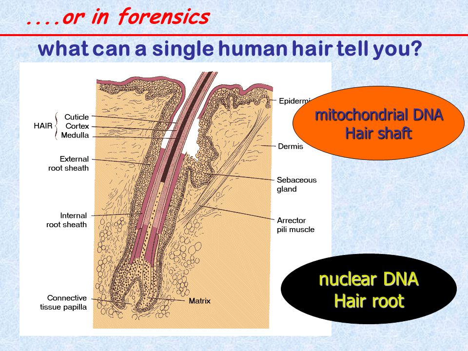 what can a single human hair tell you.