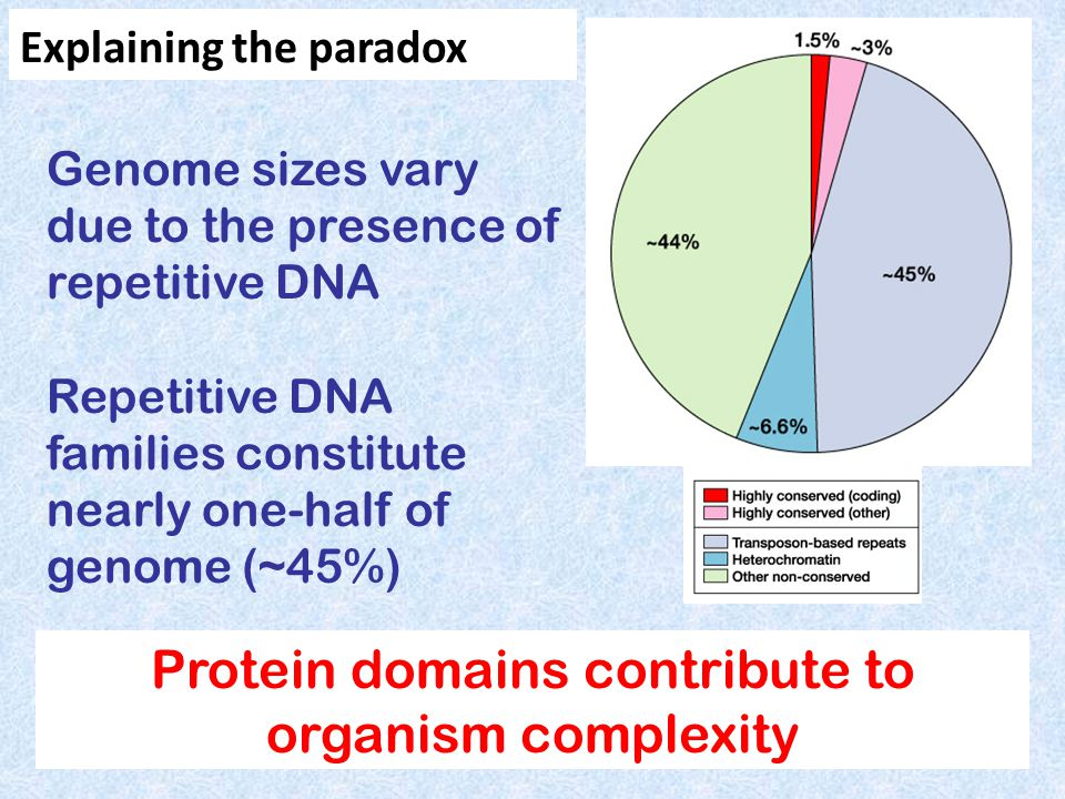 Genome sizes vary due to the presence of repetitive DNA Repetitive DNA families constitute nearly one-half of genome (~45%) Protein domains contribute to organism complexity Explaining the paradox