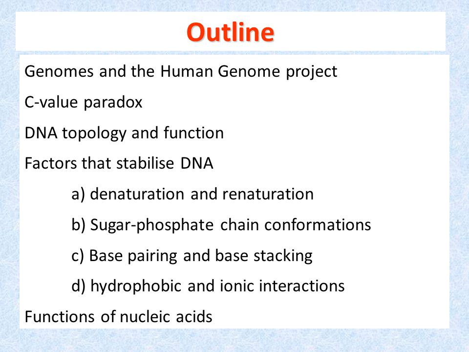 Genomes and the Human Genome project C-value paradox DNA topology and function Factors that stabilise DNA a) denaturation and renaturation b) Sugar-phosphate chain conformations c) Base pairing and base stacking d) hydrophobic and ionic interactions Functions of nucleic acids Outline