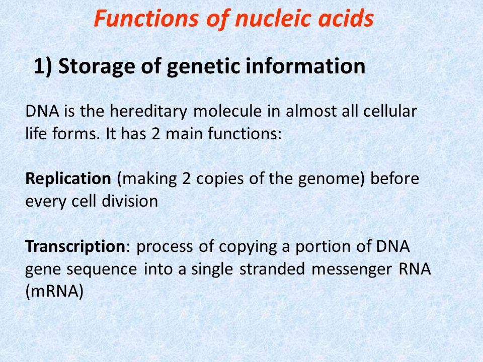 Functions of nucleic acids 1) Storage of genetic information DNA is the hereditary molecule in almost all cellular life forms.