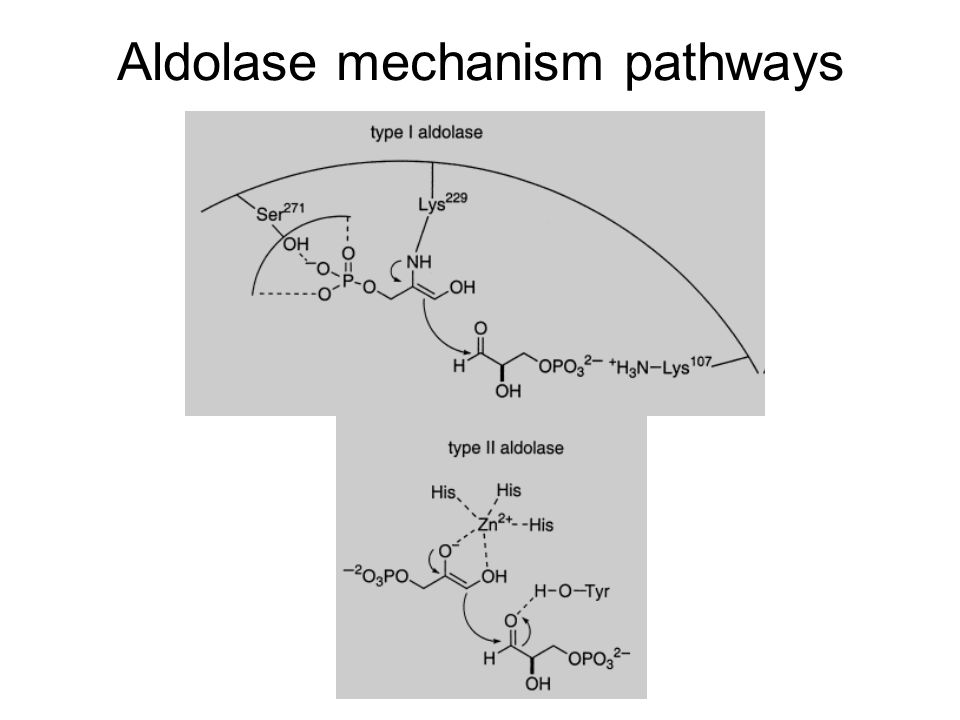 Aldolase mechanism pathways