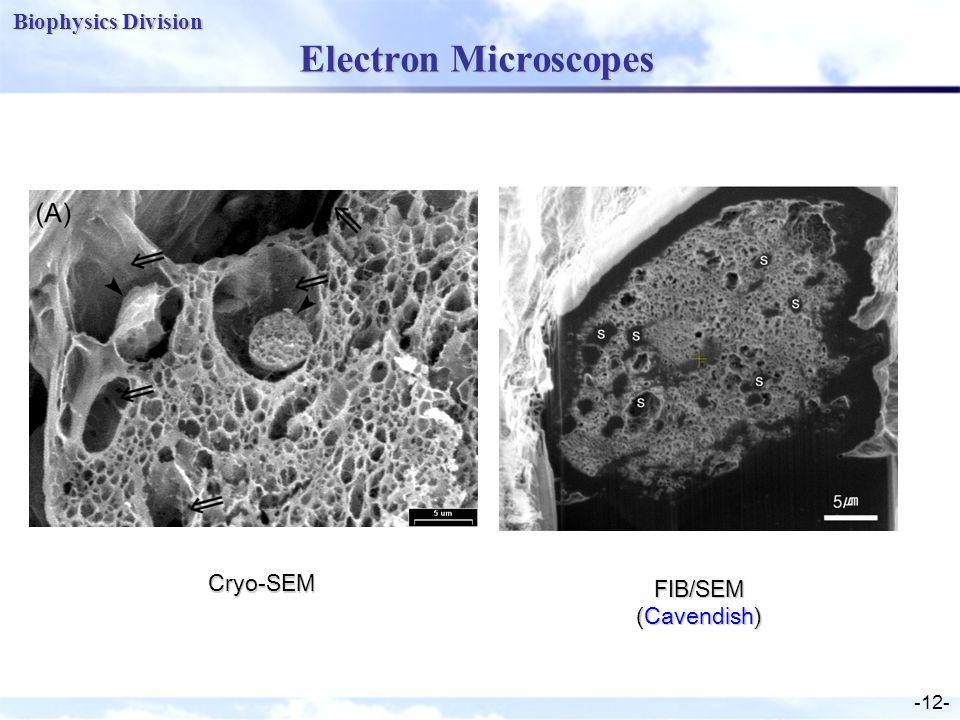 Biophysics Division -12- Electron Microscopes Cryo-SEM FIB/SEM (Cavendish)