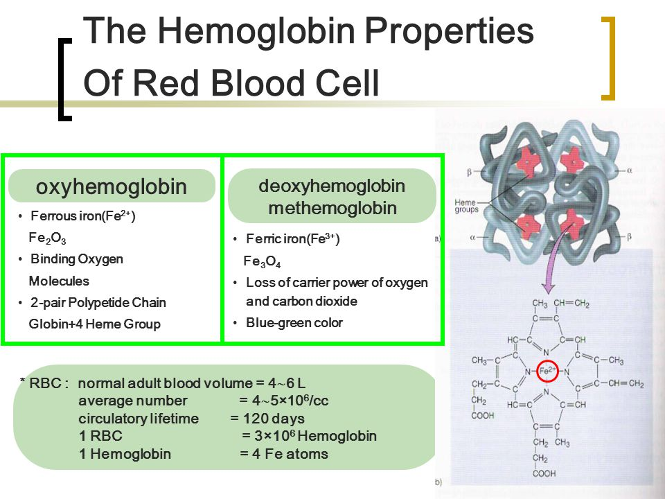 The Hemoglobin Properties Of Red Blood Cell * RBC : normal adult blood volume = 4  6 L average number = 4  5×10 6 /cc circulatory lifetime = 120 day