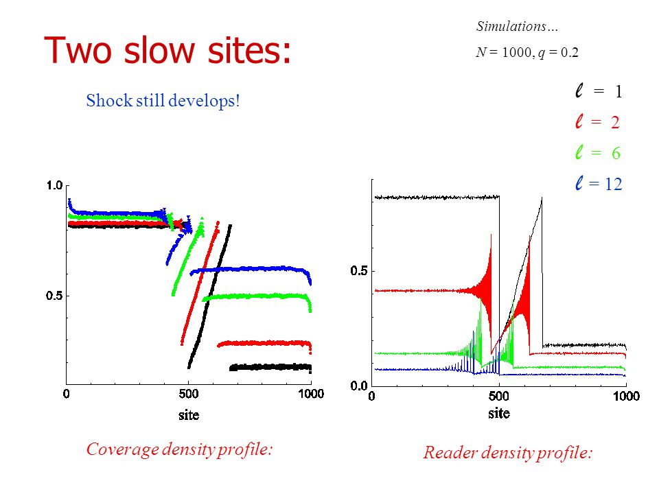 Two slow sites: Coverage density profile: Reader density profile: Simulations… N = 1000, q = 0.2 l = 0 1 l = 0 2 l = 0 6 l = 12 Shock still develops!