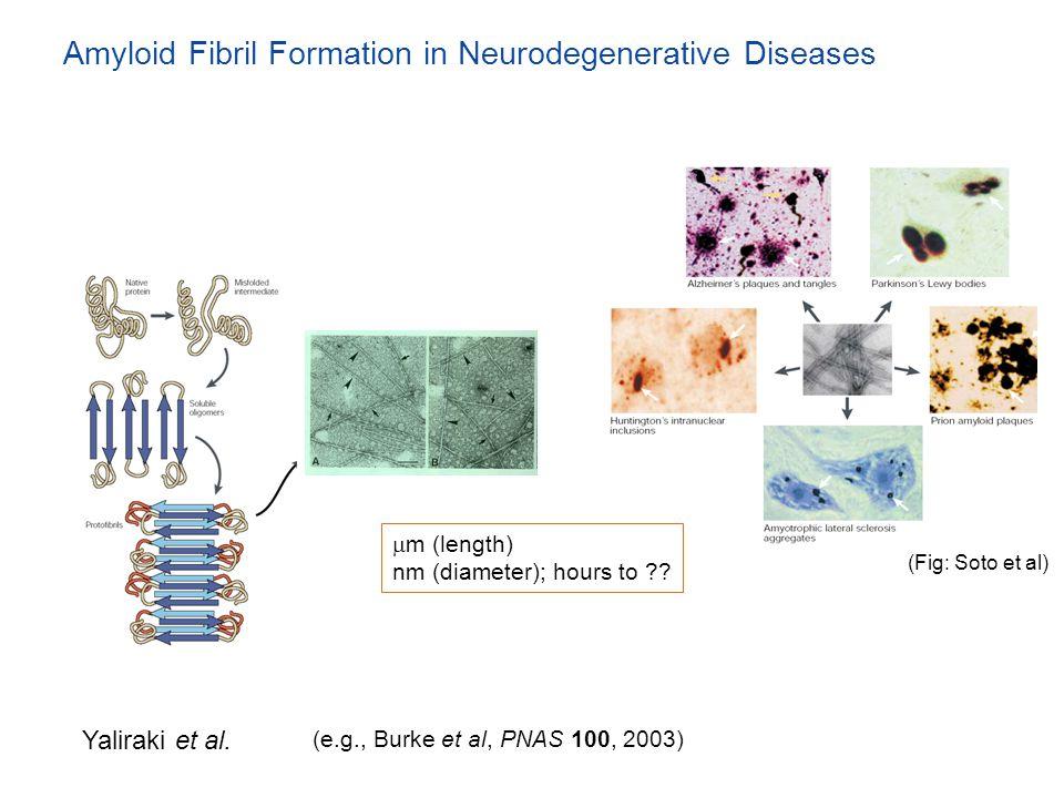 Amyloid Fibril Formation in Neurodegenerative Diseases Yaliraki et al. (e.g., Burke et al, PNAS 100, 2003)  m (length) nm (diameter); hours to ?? (Fi