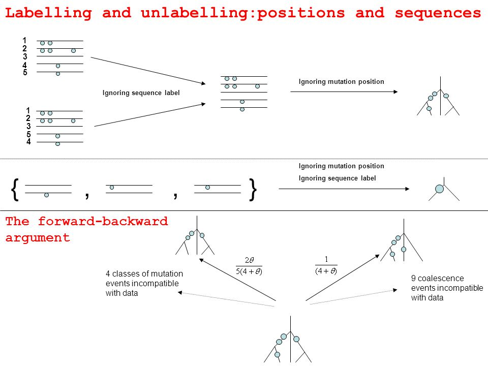 {},, Ignoring mutation position Ignoring sequence label Ignoring mutation position Ignoring sequence label Labelling and unlabelling:positions and sequences 9 coalescence events incompatible with data 4 classes of mutation events incompatible with data The forward-backward argument