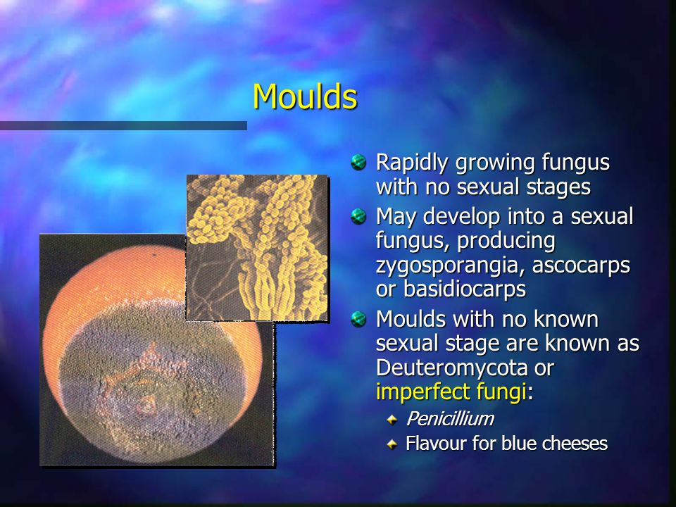 Moulds Rapidly growing fungus with no sexual stages May develop into a sexual fungus, producing zygosporangia, ascocarps or basidiocarps Moulds with n