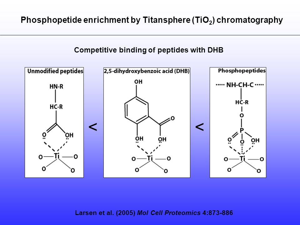 Larsen et al. (2005) Mol Cell Proteomics 4:873-886 Phosphopetide enrichment by Titansphere (TiO 2 ) chromatography Competitive binding of peptides wit