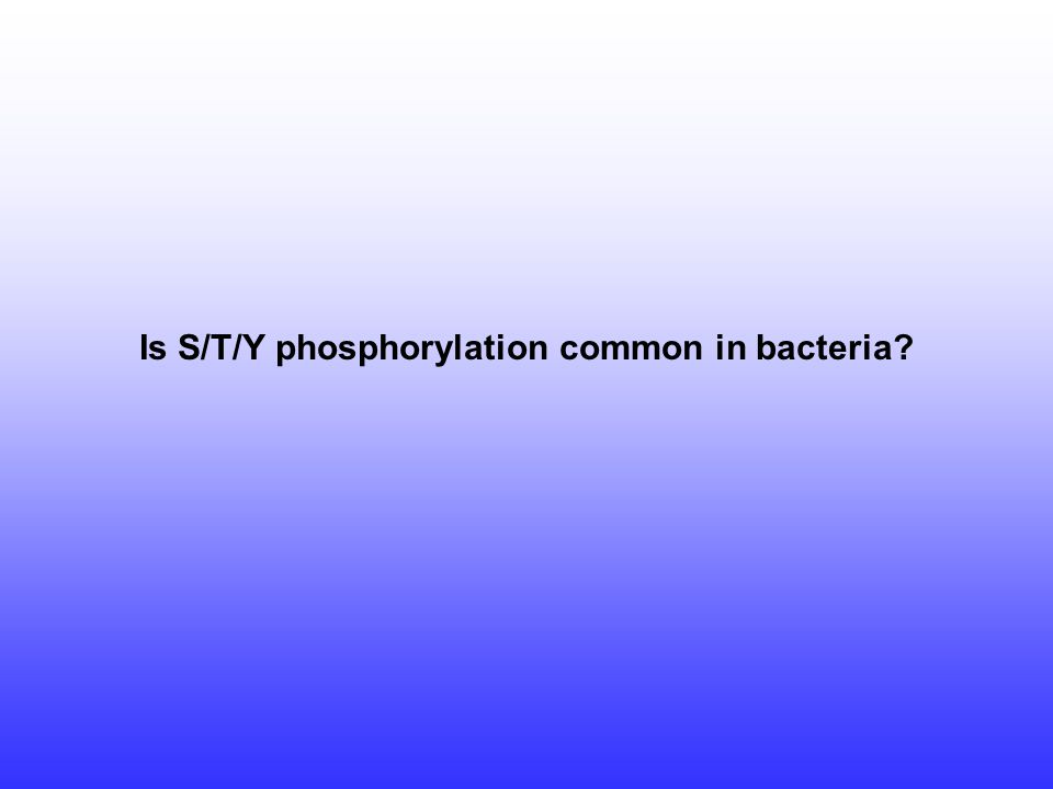 Is S/T/Y phosphorylation common in bacteria?