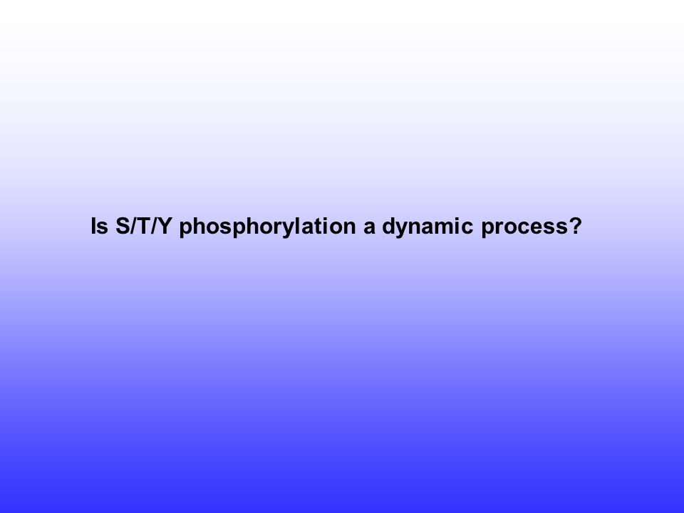 Is S/T/Y phosphorylation a dynamic process?