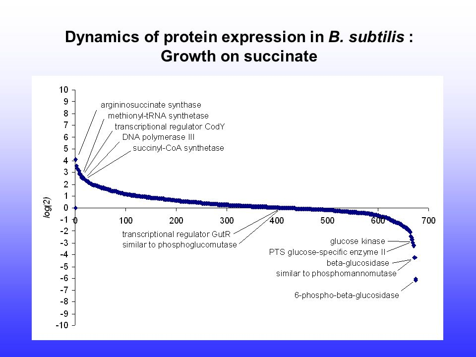 Dynamics of protein expression in B. subtilis : Growth on succinate