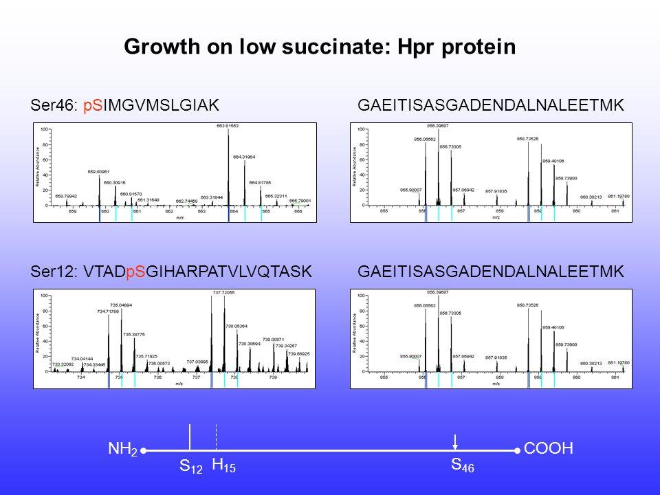 Ser46: pSIMGVMSLGIAK Ser12: VTADpSGIHARPATVLVQTASK Growth on low succinate: Hpr protein COOHNH 2 S 12 H 15 S 46 GAEITISASGADENDALNALEETMK