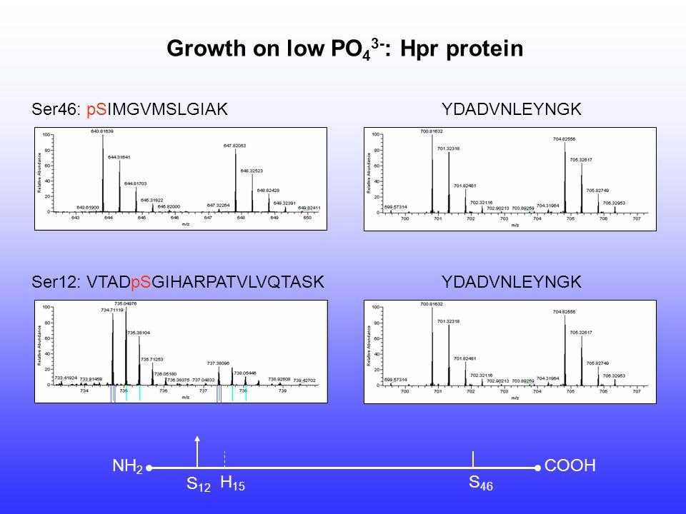 Ser46: pSIMGVMSLGIAK Ser12: VTADpSGIHARPATVLVQTASK YDADVNLEYNGK Growth on low PO 4 3- : Hpr protein COOHNH 2 S 12 H 15 S 46