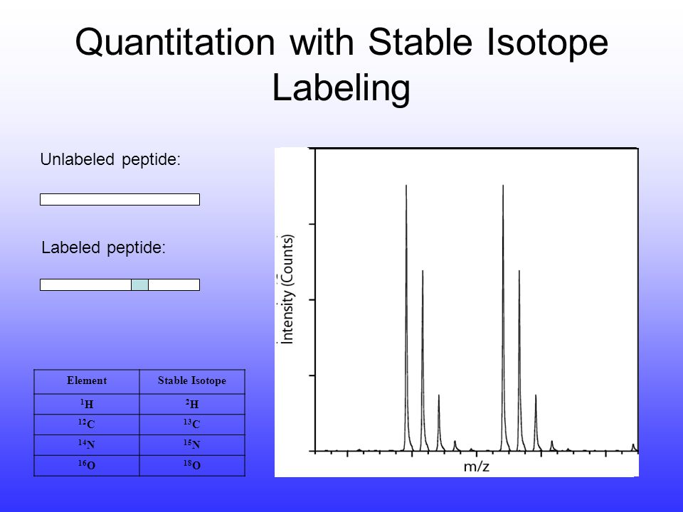 Quantitation and identification by MS (nanoscale LC-MS/MS) Arg- 12 C 6 Arg- 13 C 6 Resting cells Treated (drug, GF) Combine and lyse, protein purification or fractionation Background protein.