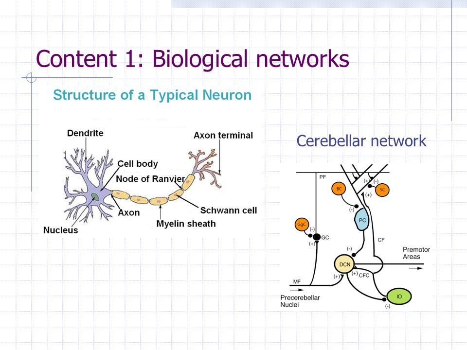 Content 1: Biological networks Cerebellar network