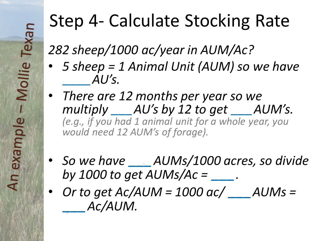 282 sheep/1000 ac/year in AUM/Ac? 5 sheep = 1 Animal Unit (AUM) so we have ____ AU's. There are 12 months per year so we multiply ___ AU's by 12 to ge